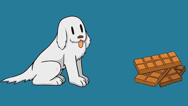 Don't give dogs a chocolat